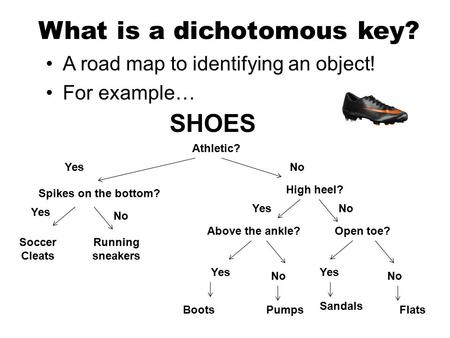 What is a dichotomous key? A road map to identifying an object! For example… SHOES Athletic? No Spikes on the bottom? Open toe?Above the ankle? High heel?