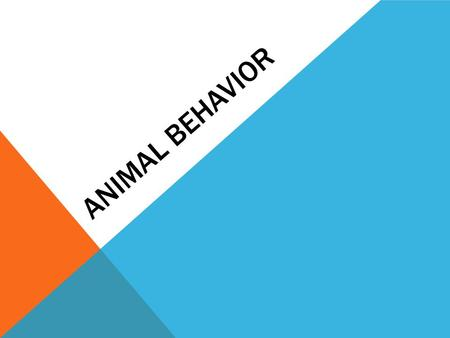 ANIMAL BEHAVIOR. TERMS TO KNOW Instinct – (reflexes and responses) what the animal has at birth. Ex. Nursing, searching for food. Habituation – learning.