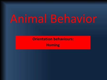 Animal Behavior Orientation behaviours: Homing. Ability of an animal to find it's way home over unfamiliar territory – eg homing pigeons Not necessarily.