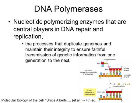 DNA Polymerases Nucleotide polymerizing enzymes that are central players in DNA repair and replication, the processes that duplicate genomes and maintain.