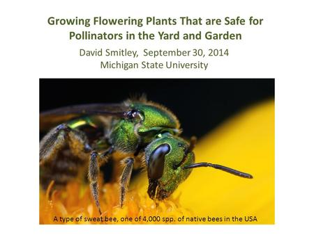 Growing Flowering Plants That are Safe for Pollinators in the Yard and Garden A type of sweat bee, one of 4,000 spp. of native bees in the USA David Smitley,
