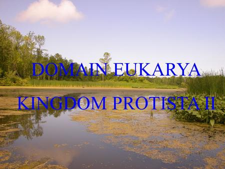 DOMAIN EUKARYA KINGDOM PROTISTA II. Multicellular Protista (Red, Brown, & Green algae)  Major primary producers in aquatic systems  Provide home for.