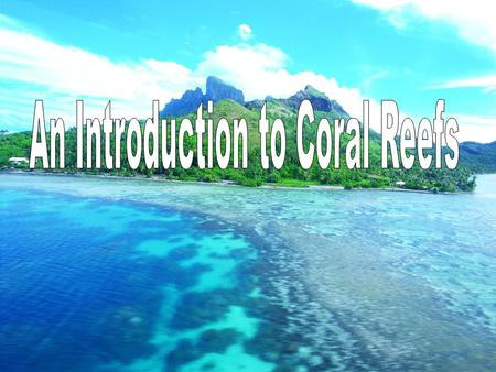 What is coral? It's a living organism! It is an invertebrate 2 different types:  Reef Building: Hermatypic  Solitary: Ahermatypic Coral is cousins to.