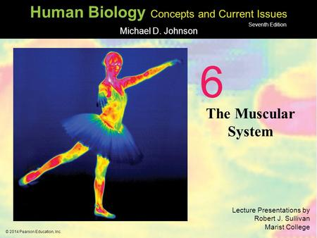 6 The Muscular System 1.