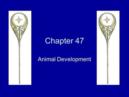 Chapter 47 Animal Development. I. Fertilization A.Sea Urchins B.Mammals.
