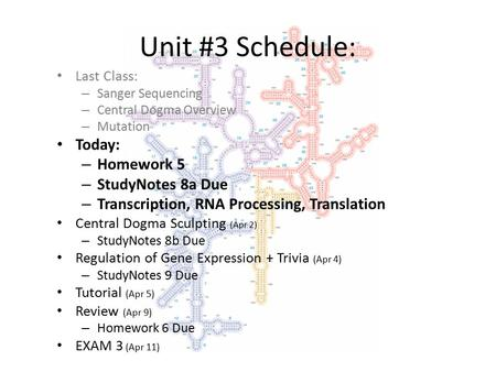 Unit #3 Schedule: Last Class: – Sanger Sequencing – Central Dogma Overview – Mutation Today: – Homework 5 – StudyNotes 8a Due – Transcription, RNA Processing,