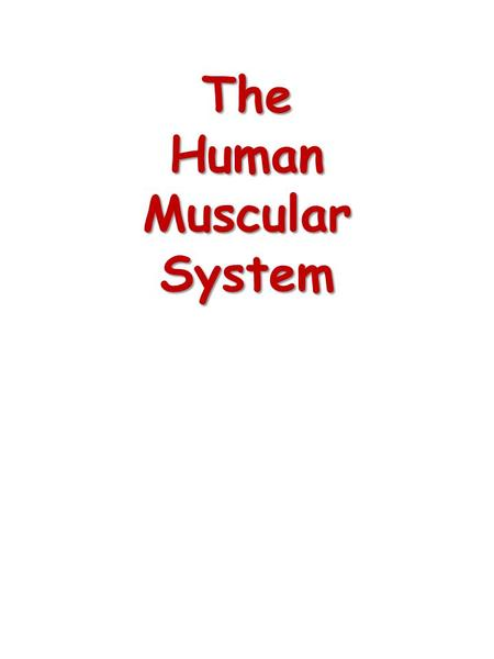 The Human Muscular System. Types of Muscle Cardiac Muscle Cardiac Muscle – Striated muscle found only in the heart – Under involuntary control – Only.