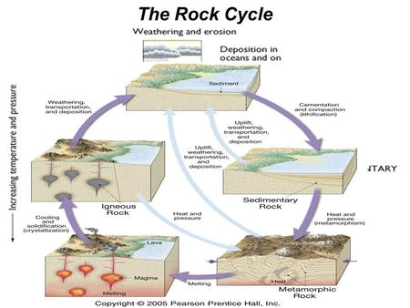 The Rock Cycle. Sedimentary Processes 1 2) & 3) Sediments are transported and deposited 4.