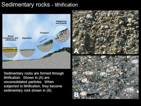 Sedimentary rocks - lithification Sedimentary rocks are formed through lithification. Shown in (A) are unconsolidated particles. When subjected to lithification,