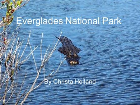 Everglades National Park By Christa Holland. Location Region – Southeast State – Florida Capital – Tallahassee Longitude – 80.70000°W Latitude – 26.0000°N.