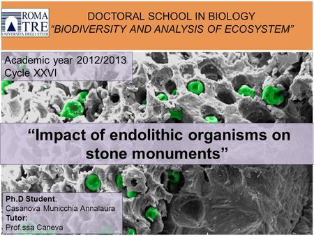 "DOCTORAL SCHOOL IN BIOLOGY ""BIODIVERSITY AND ANALYSIS OF ECOSYSTEM"" ""Impact of endolithic organisms on stone monuments"" Academic year 2012/2013 Cycle XXVI."