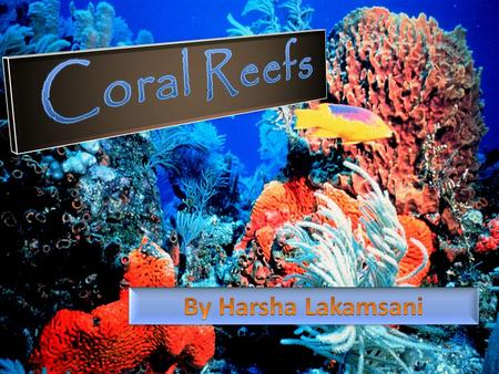 Introduction Coral Reefs are made of limestone structures of dead and living stony coral Coral polyps are formed by red and green coralline algae Coral.