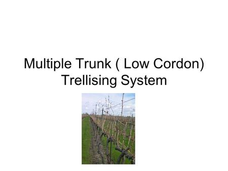 Multiple Trunk ( Low Cordon) Trellising System. Yield, Quality, Cost are important in that order. If you don't have a minimum yield you are not in business.