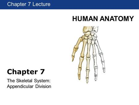 HUMAN ANATOMY Chapter 1 Lecture Chapter 7 The Skeletal System: Appendicular Division Chapter 7 Lecture.