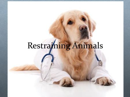 Restraining Animals. More is NOT Better O Use the LEAST amount of restraint that is needed O Dogs can be stubborn and won't give up O The more you try.