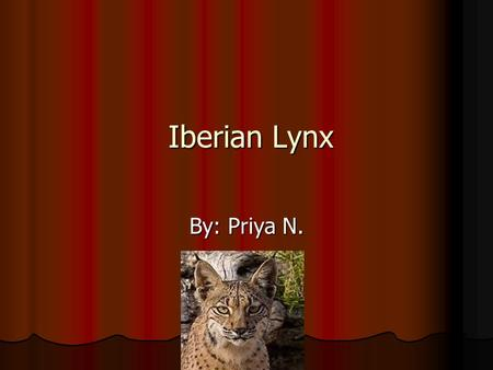 Iberian Lynx Iberian Lynx By: Priya N.. Introduction As we all know, many human activities are destroying the Earth's atmosphere now and then. These activities.