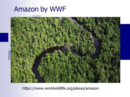 Amazon by WWF https://www.worldwildlife.org/places/amazon.