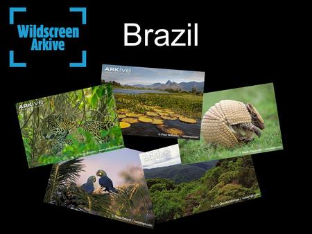 Brazil. Where is Brazil? Brazil is home to at least 103,870 animal species and between 43,000 and 49,000 plant species. Each year about 700 new animal.