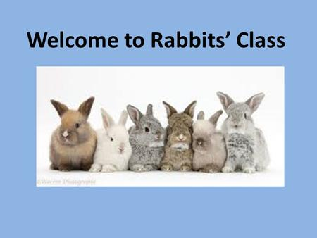 Welcome to Rabbits' Class. What will a day be like for my child in Year 1? 8:55 – Miss Phillips will collect Rabbits from the playground. 9:00 – Register.