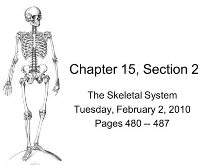 Chapter 15, Section 2 The Skeletal System Tuesday, February 2, 2010 Pages 480 -- 487.