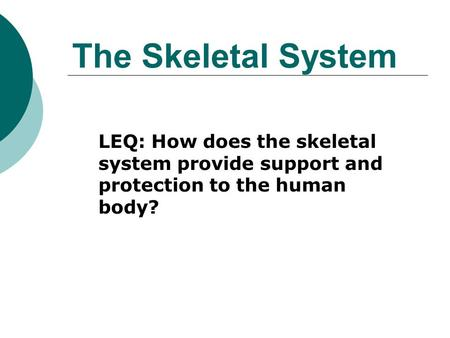 The Skeletal System LEQ: How does the skeletal system provide support and protection to the human body?