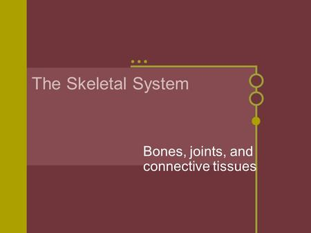 The Skeletal System Bones, joints, and connective tissues.