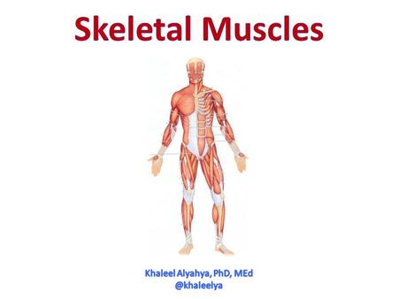 OBJECTIVES  At the end of the lecture, students should be able to: Describe the main criteria of skeletal muscles. Describe the attachments of skeletal.