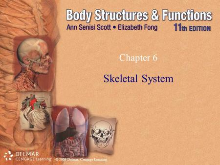 Chapter 6 Skeletal System.