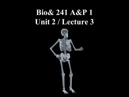 Bio& 241 A&P 1 Unit 2 / Lecture 3. Functional classification of joints (based on degree of movement permitted within the joint) Synarthrosis: Immovable.
