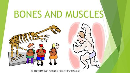 BONES AND MUSCLES © copyright 2014 All Rights Reserved CPalms.org.