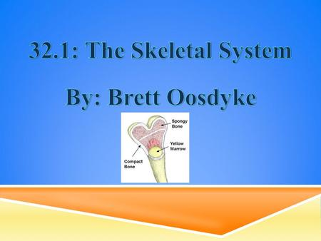 32.1: The Skeletal System By: Brett Oosdyke.