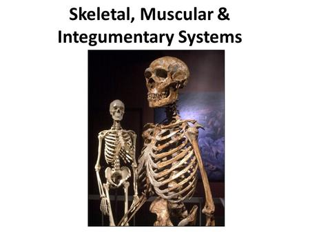Skeletal, Muscular & Integumentary Systems