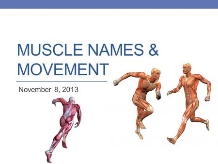 Muscle Names & Movement
