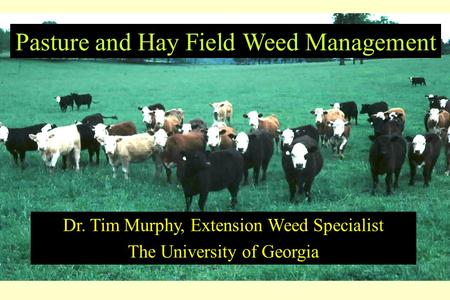 Pasture and Hay Field Weed Management Dr. Tim Murphy, Extension Weed Specialist The University of Georgia.