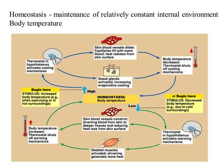 Homeostasis - maintenance of relatively constant internal environment