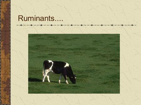 Ruminants..... Feed In VFA Microbial Protein Vitamins The nutrients presented to the cow or steer by the rumen are very different than those entering.