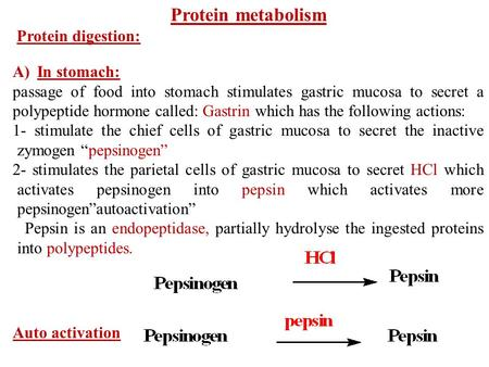 Protein metabolism Protein digestion: A)In stomach: passage of food into stomach stimulates gastric mucosa to secret a polypeptide hormone called: Gastrin.