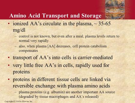 Copyright © 2006 by Elsevier, Inc. Amino Acid Transport and Storage ionized AA's circulate in the plasma, ~ 35-65 mg/dl –control is not known, but even.