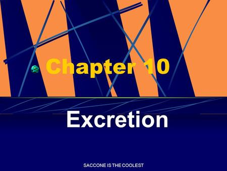 SACCONE IS THE COOLEST Chapter 10 Excretion. SACCONE IS THE COOLEST Excretion The process by which cellular wastes are removed from the organism.