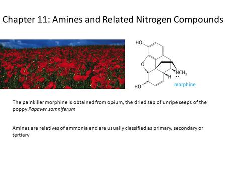 Chapter 11: Amines and Related Nitrogen Compounds The painkiller morphine is obtained from opium, the dried sap of unripe seeps of the poppy Papaver somniferum.