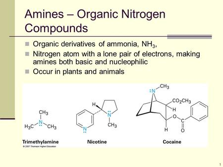 Amines – Organic Nitrogen Compounds