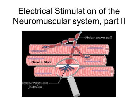 Electrical Stimulation of the Neuromuscular system, part II.