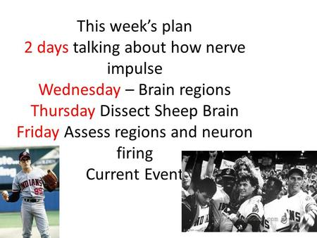 This week's plan 2 days talking about how nerve impulse Wednesday – Brain regions Thursday Dissect Sheep Brain Friday Assess regions and neuron firing.
