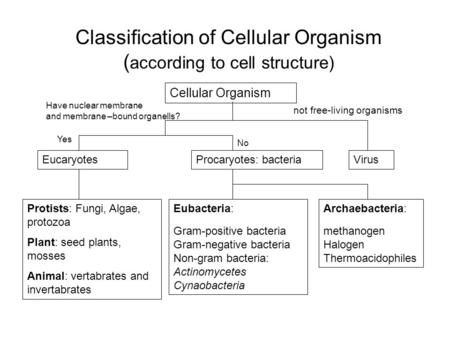 Classification of Cellular Organism ( according to cell structure) Cellular Organism EucaryotesProcaryotes: bacteriaVirus Eubacteria: Gram-positive bacteria.