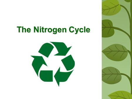 The Nitrogen Cycle. Why is nitrogen so important? PROTEINSNitrogen is required to make PROTEINS Amino Acid Structure.