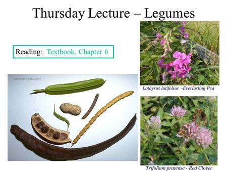 Thursday Lecture – Legumes Reading: Textbook, Chapter 6.