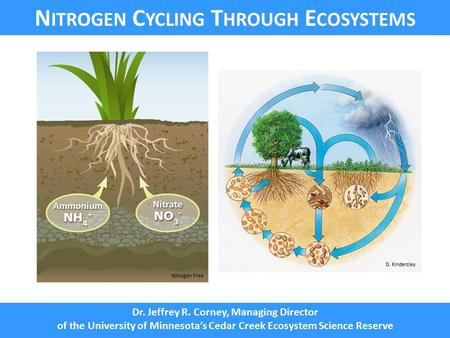 N UTRIENT C YCLING N ITROGEN C YCLING T HROUGH E COSYSTEMS Dr. Jeffrey R. Corney, Managing Director of the University of Minnesota's Cedar Creek Ecosystem.
