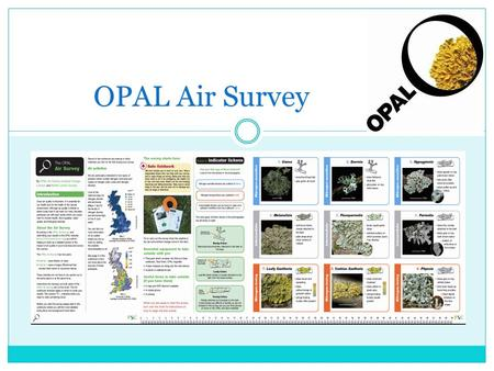 OPAL Air Survey. What is air? Air is a mixture of gases Nitrogen 78.09%, Oxygen 20.95%, 1% other.