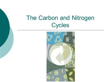 The Carbon and Nitrogen Cycles