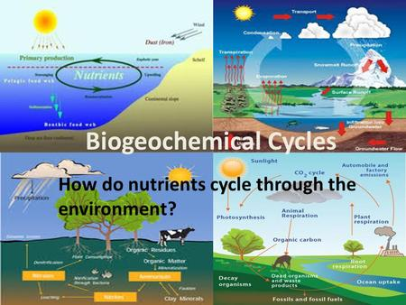 photosynthesis cycle diagram Photosynthesis diagram explained kimberlee dillon loading photosynthesis: calvin cycle - duration: 13:28 khan academy 927,688 views 13:28.